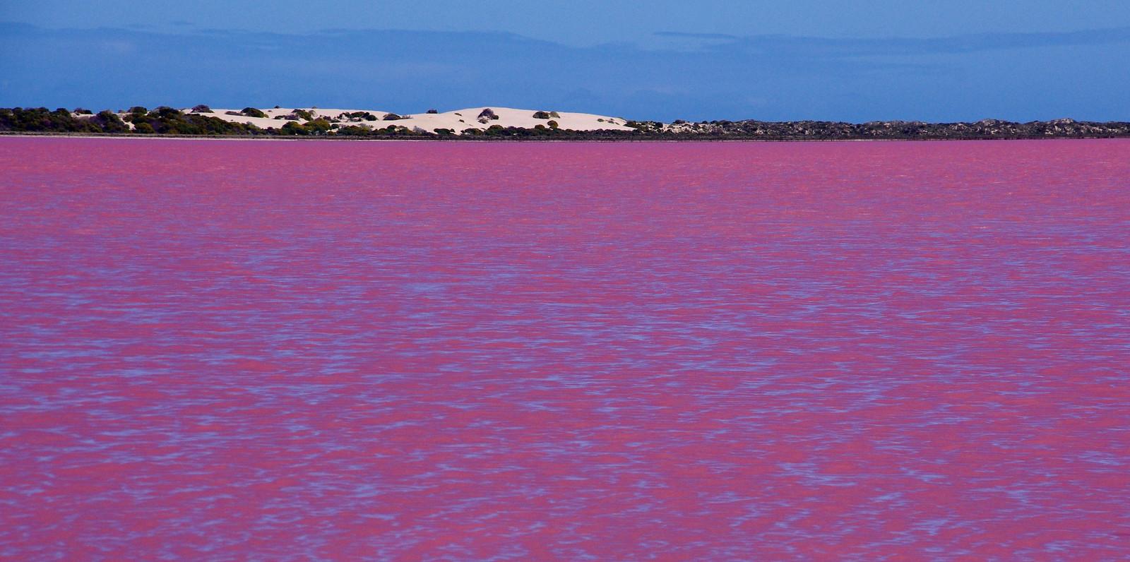 Lago rosa de agua salada