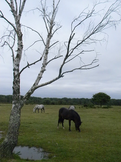 Tree, ponies and pool