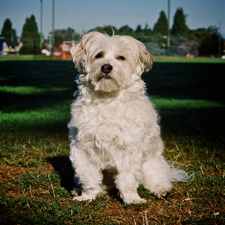 Kodak Portra 800 shot on a Hasselblad 500c/m 150mm F4 Planar Zeiss