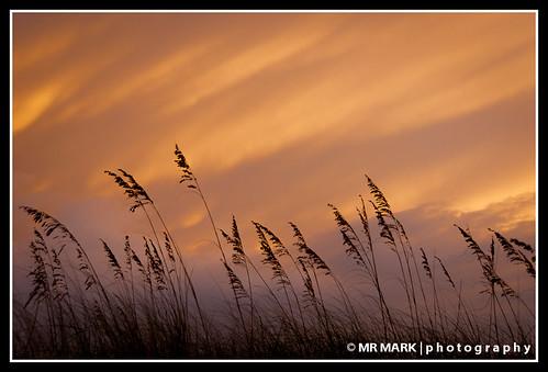 sea sky grass sunrise wind florida fl destin oats