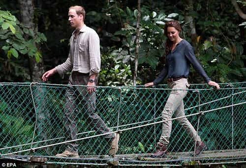 Borneo Rainforest Research Center3