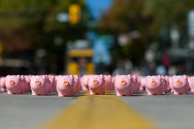 Pink Piggies
