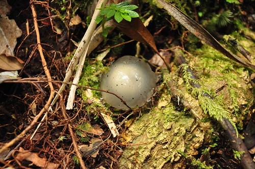 DSC_04 - jelly looking mushroom