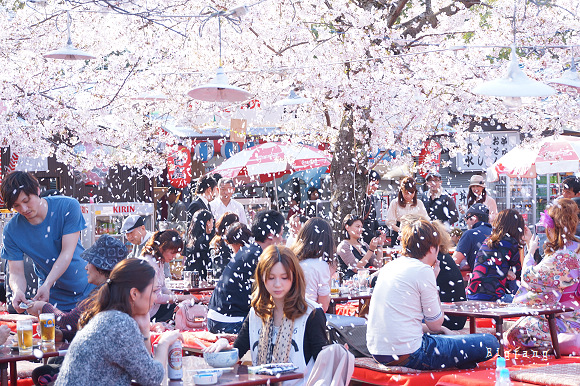 「円山公園 櫻花」的圖片搜尋結果