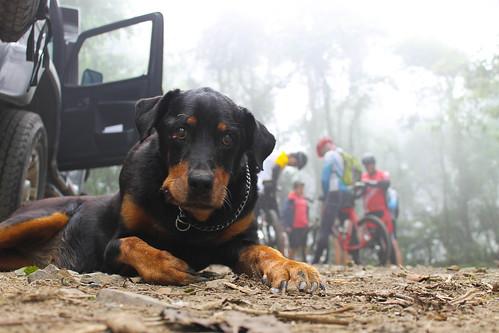 Mountain Bike - Ilhabela - Castelhanos - Por Pedro Barreto-7