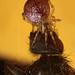 20121006_140312_spider