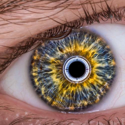 iRobot Eye v2.o - 無料写真検索fotoq