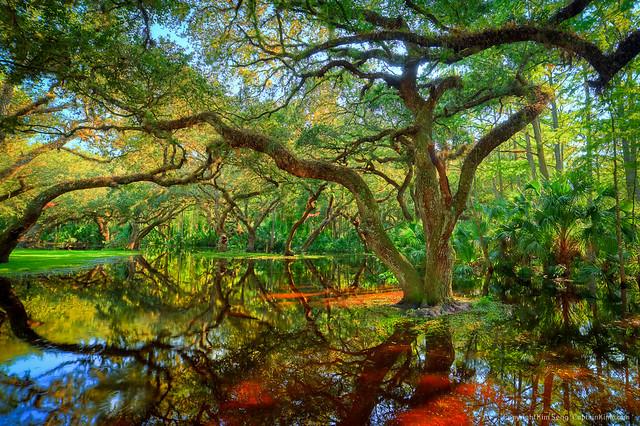 Flickriver photos from oak tree oakland ca united states for Fish river tree farm