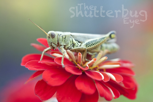 Grasshopper by The Shutterbug Eye™