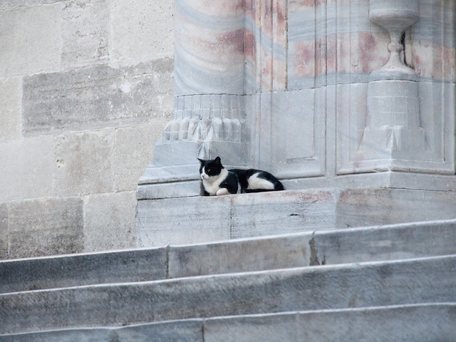 Cat at the gate of Blue Mosque