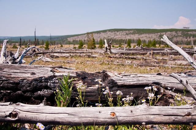 08.07.12_Yellowstone 092