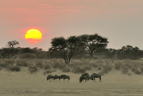 sunrise panoramafotográfico kgalagaditnp