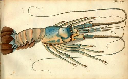 009-Â Versuch einer Naturgeschichte der Krabben und Krebse- 1790- Johann Friedrich Wilhelm Herbst- Humboldt University