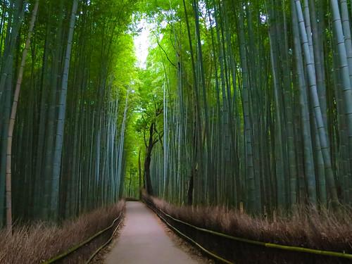 trees plants tree green nature japan forest canon garden flora kyoto asia natural bamboo arashiyama zen emerald s100 nonhdr saganogrove
