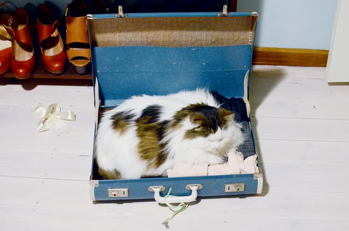 babycat suitcase
