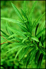 leaf, plant, flora, green, plant stem,