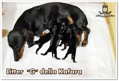 """Litter """"G"""" della Kafara"""