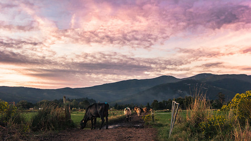 africa sunset mountains nature clouds landscape southafrica sonnenuntergang cows 山 日落 südafrika 云 非洲 南非 60d