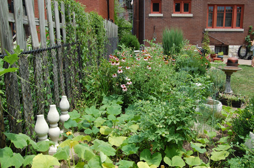 sustainable backyard in St Louis (courtesy of Amanda Joy, creative commons)