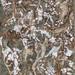 藏葉落白-24,4F,複合媒材,2012