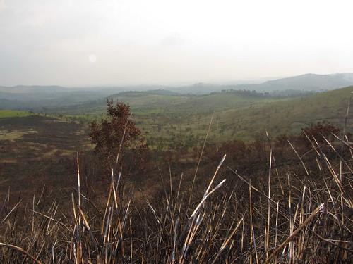dry season burns