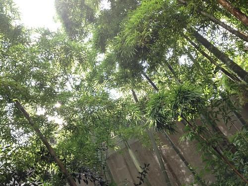 目の前に竹があって気持ちいいんです@Fritto (フリット)