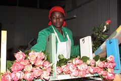 Kenya flower farm / Credit: Suleiman Mbatiah/IPS