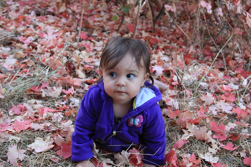 Jovie sitting in the red leaves 15