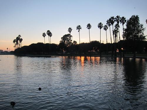 california sunset usa lake water birds swimming landscape unitedstates palmtrees coot 2012 alondrapark