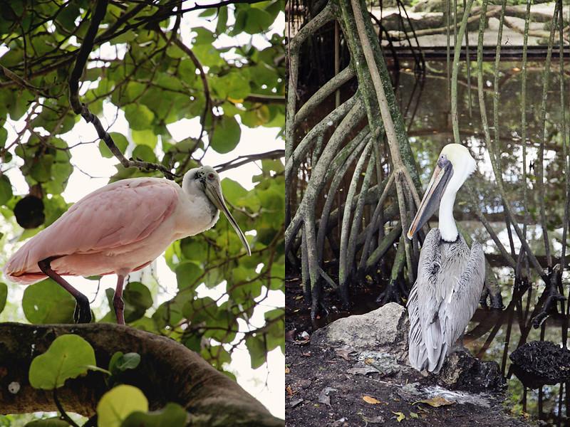Flamingo Gardens 12