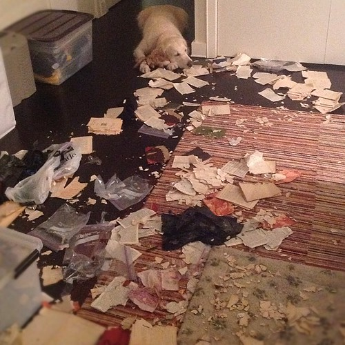 In which Sailor destroys much of my rare books collection.