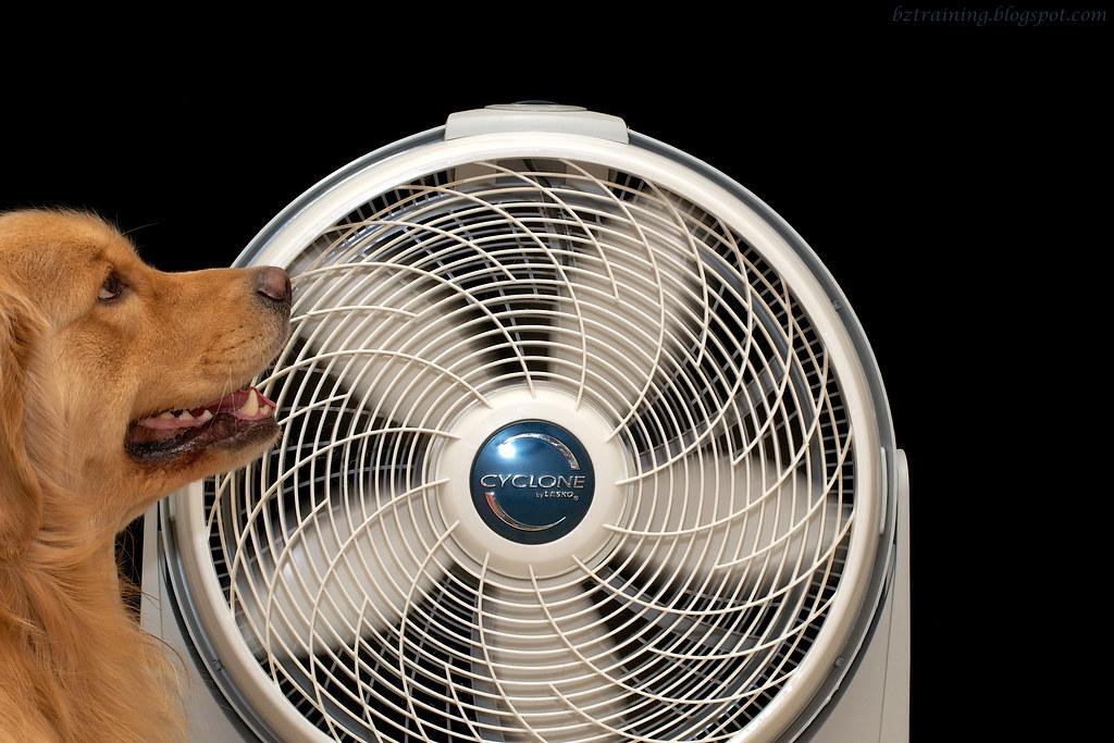 Henry's Fan (round 2)