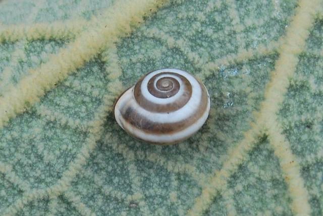 Snail at leaf - original cut