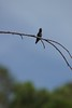 279/366 Hummingbird