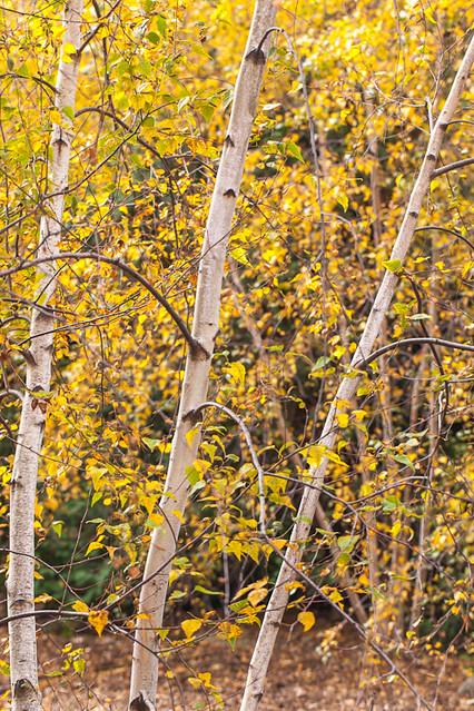 Olbrich Autumn Wonders - A World of Yellows