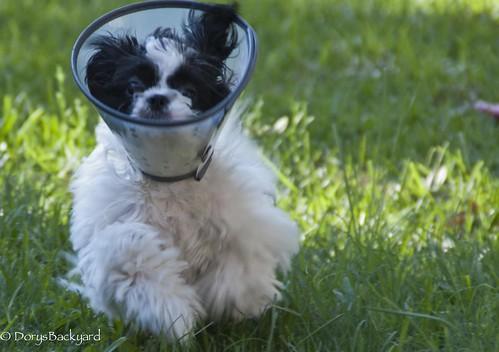 DogBlogWE101512-8