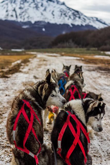 Perros - Ushuaia