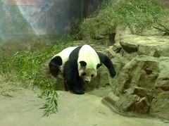 Panda House visit