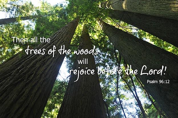 Psalm 96 12.jpg