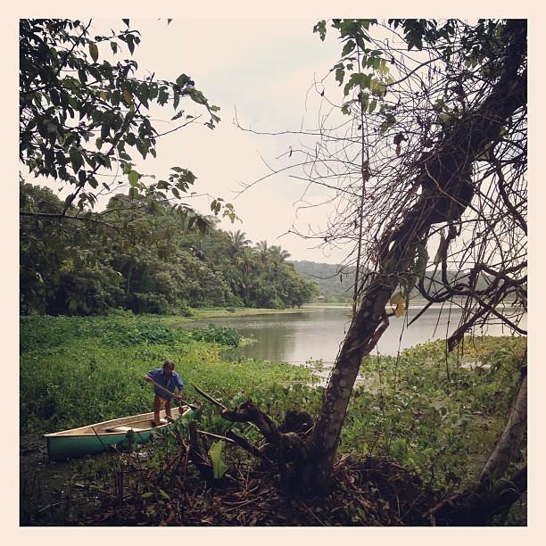 Domingo tropical VIII #panamá #gamboa