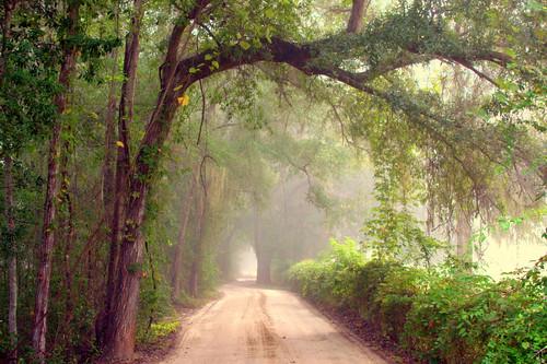misty fog gainesville earlymorning fl countryroads floirda kanapaha ambientglow