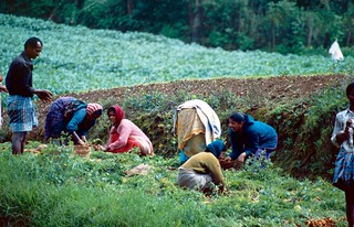 Youth Migrant Farm Workers Ineligible for DACA