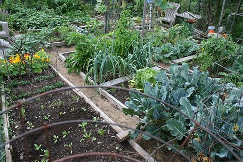 september garden plot 042