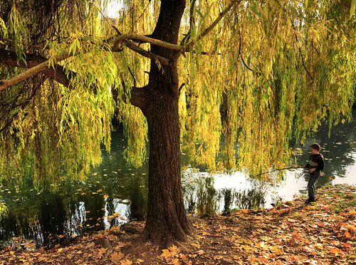 Fishing under a Weeping Willow
