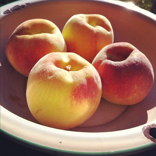 some of the prettiest peaches this harvest #organicgarden #urbangarden #maine #madisonpeach