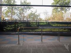 内湖葦原を再現した水槽