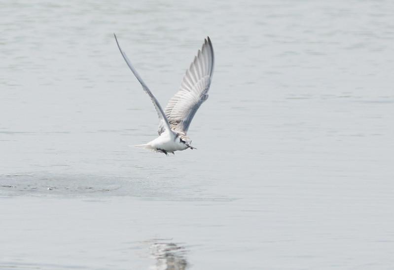 鳥拍 - 再戰神偷