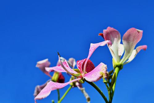 antecipando a primavera by Fred Matos