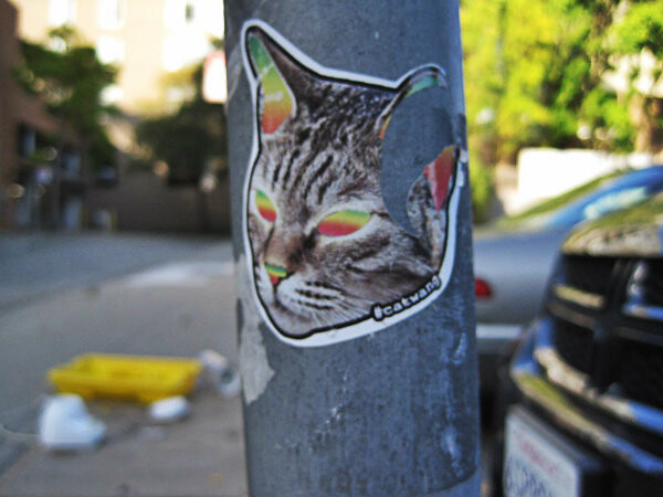 laser-cat-sticker-soma