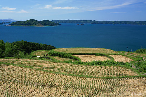 Tsuchiya Rice Terraces